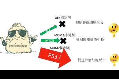 联合用药有望抑制ALK基因异常的神经母细胞瘤生长