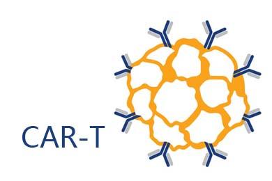 CAR-T研究又在憋新的大招!实体瘤的新希望!